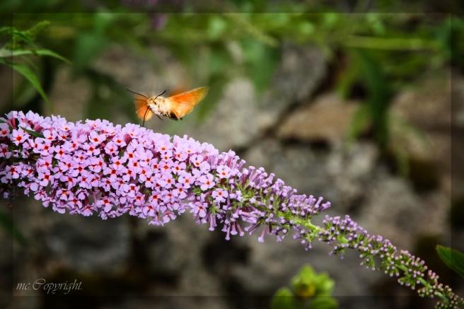 faune,flore