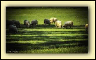 La bonne herbe !