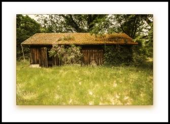 cabane landaise abandonnée