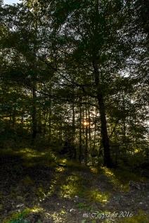 sous-bois-montagnes-Forêt