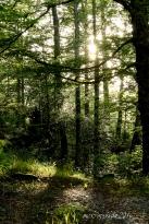 sous-bois-montagnes-forest