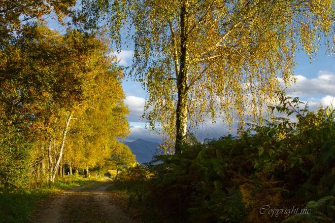promenade au pieds des Pyrénées