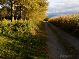 Le chemin Henri IV