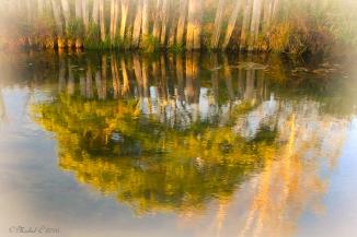 ruisseau qui fait miroir,teintes douces d'automne