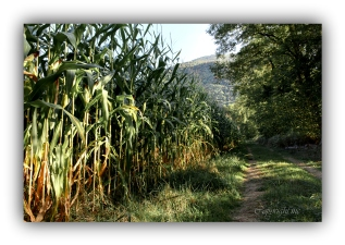 photo-chemin-montagnes-gave-img_7147-2004x1427