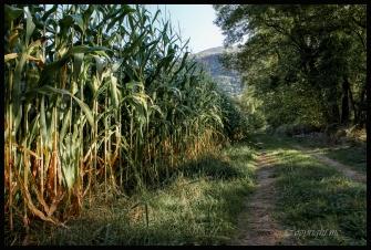 photo-chemin-montanes-gave-img_7146-1948x1371