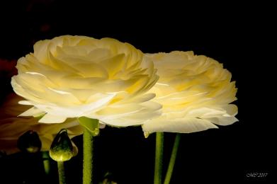 fleurs et éclairage