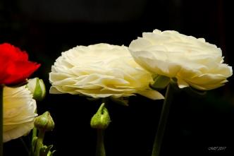Fleurs et lumière (3)