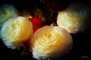 Fleurs et lumière (4)