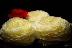 fleurs et lumière