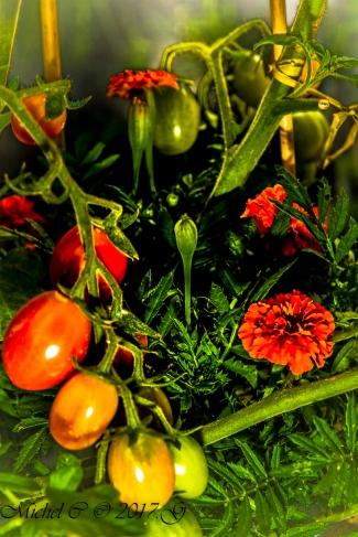 œillets et tomates olives