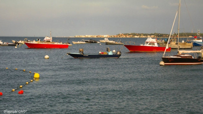 bateaux de pêche-port de la vigne