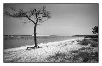 Photo version noir&blanc de la plage du Mimbeau , coté dune duPyla, Bassin d'Arcachon